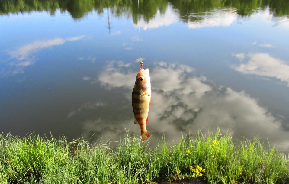 рыбка, травка, облака