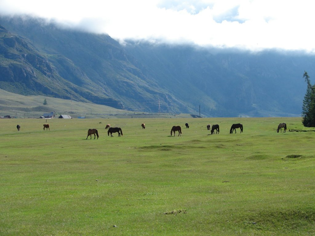 Пора на Алтай