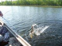 привет всем рыбакам