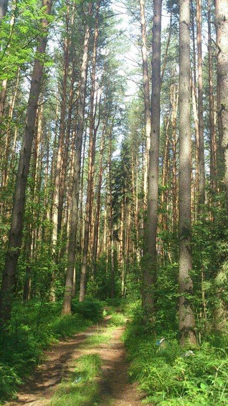 Очень красивый и чистый лес!