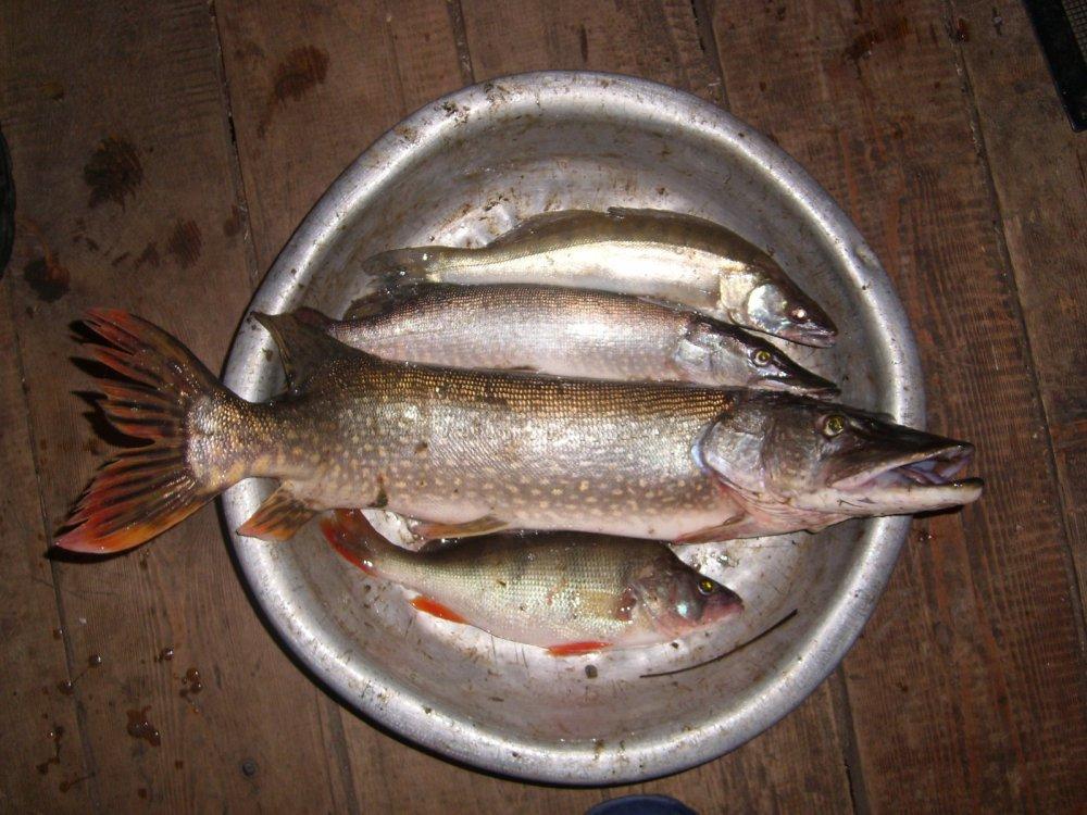 """Для меня """"Удачная рыбалка"""""""