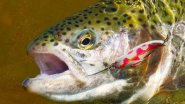 Так ловят форель на платниках. Trout fishing on commercial lakes