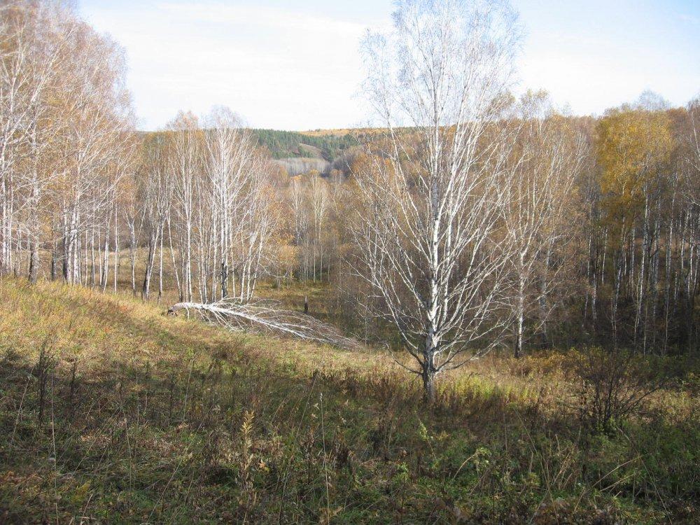 Осенний Салаир