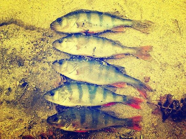 Ноябрьская рыбалка!!брр:)