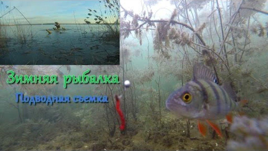 Подводная съемка зимняя ловля плотвы