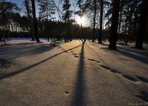 """В лесах, у Бердска.... январь 2016 г. Из серии """"Мои Фото-трофеи разных лет""""."""