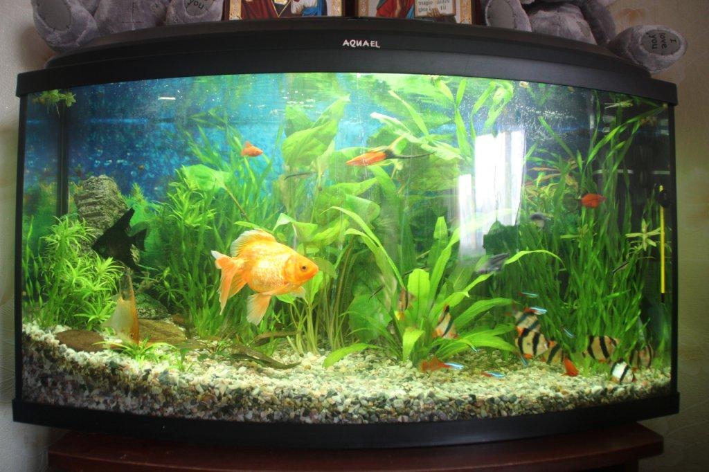 Мой Первый аквариум.