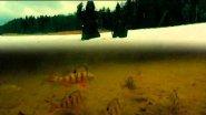 Зимняя Рыбалка на Окуня. Балансир. Глухозимье.  Подводное видео