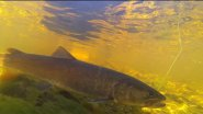 Ярцевский марафон №1. Супер рыбалка в дикой тайге вдалеке от цивилизации.