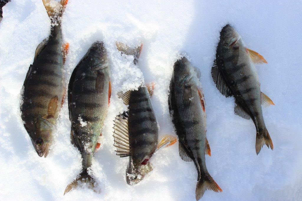 Томская область озера рыбалка