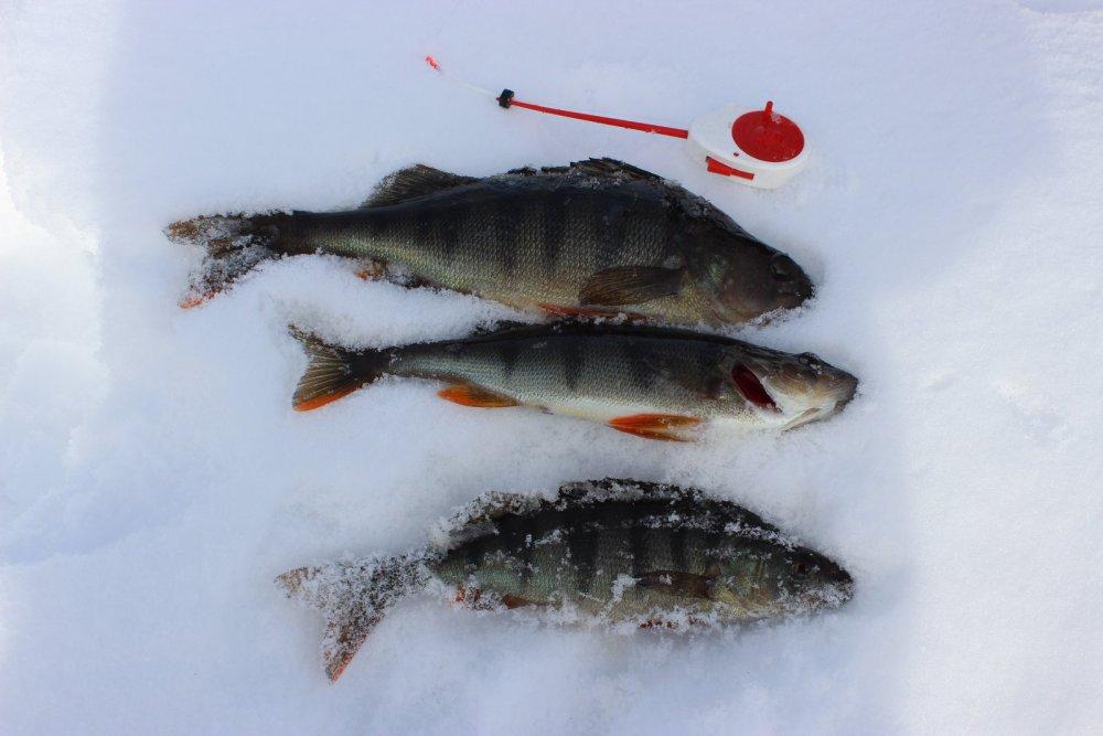 Ловля щуки зимой на озере Поиск стоянок