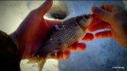 Зимняя рыбалка на карася   Половодье на реке Быстрая Сосна