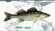 Чистка рыбы НОУ-ХАУ, при помощи мини-мойки Karcher