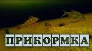Прикормка - подводная съемка: окунь, подлещик, плотва