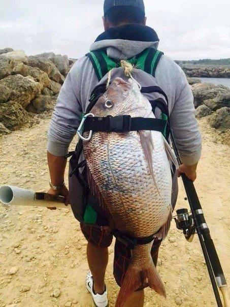 Приучил свою ручную рыбу к рыбалке.