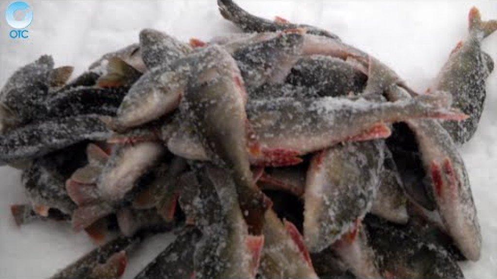 """Программа """"Рыбалка в Сибири"""": 01 апреля 2016"""