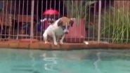 Пёс VS огромный сом!!!