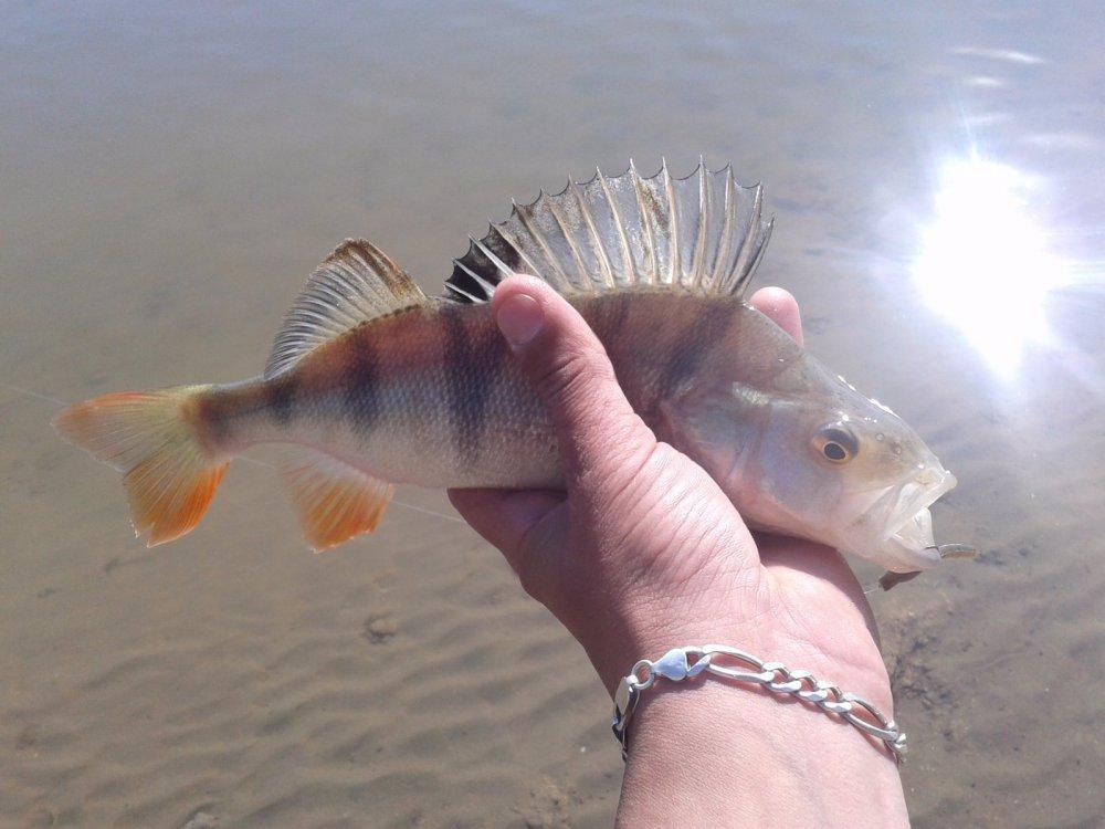 солнечная рыба))