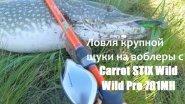 Ловля крупной щуки на воблеры с Carrot STIX Wild Wild Pro 701MH