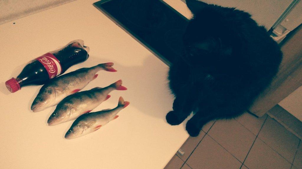 Кот любуется сегодняшним уловом:)
