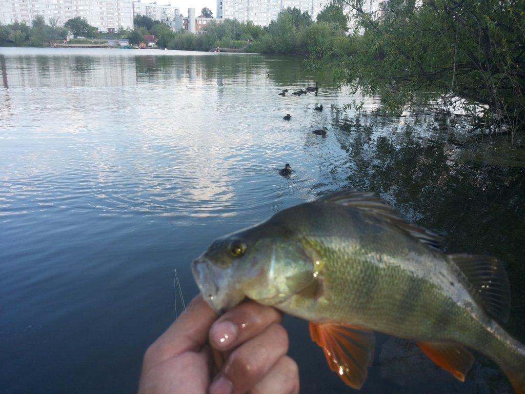 рыбалка с компанией :)