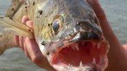 Открытие лодочного сезона 2016. Рыбалка на судака, щуку и окуня