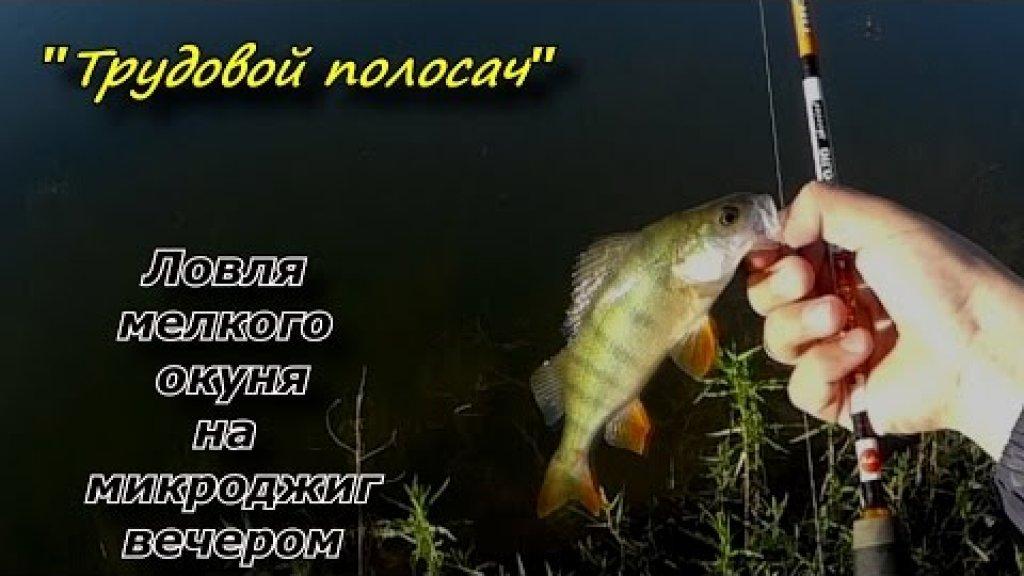 """""""Трудовой полосач""""- Ловля мелкого окуня на МДЖ . Catching small perch"""