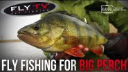 FLY TV - Fly Fishing for Big Perch