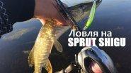 Ловля на sprut shigu