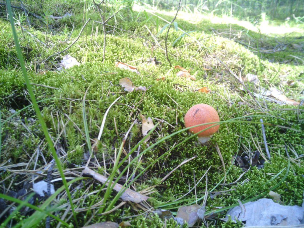 Каракан грибы 3