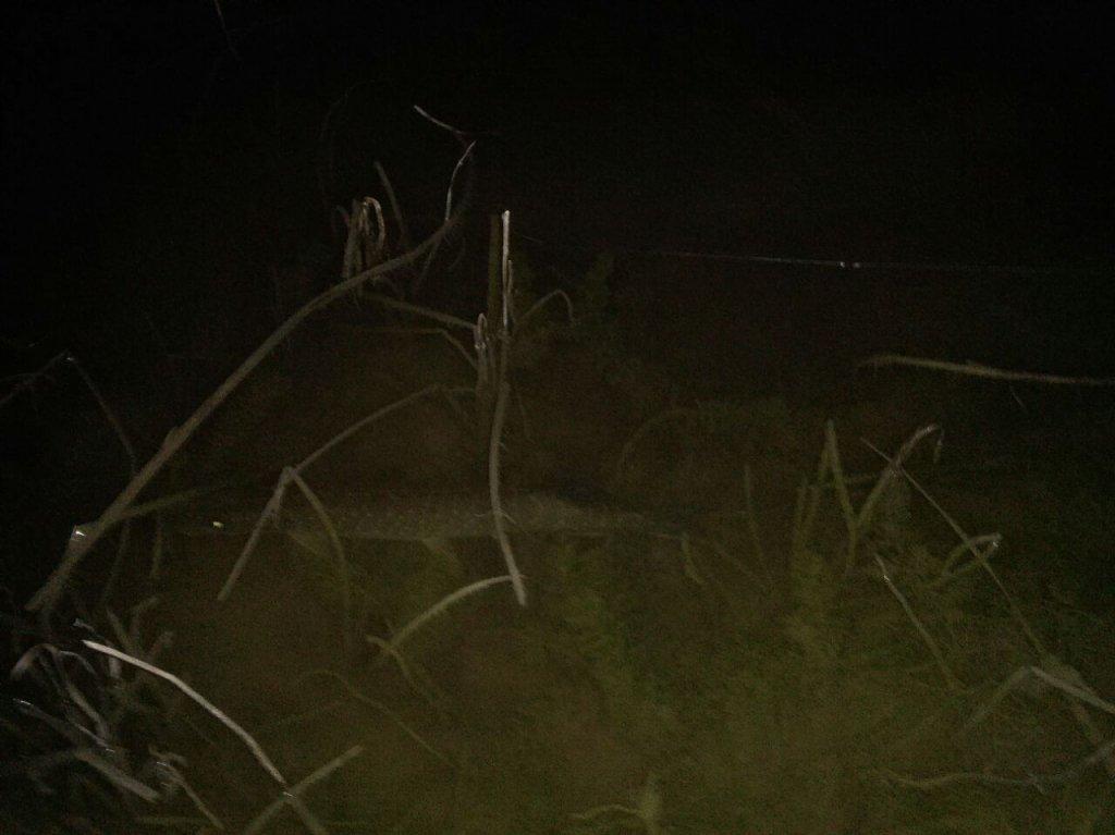 Хищница ночью!!!
