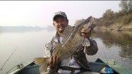 Рыбалка в томской области. Трофейный судак