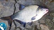 Трофейный лещ на #фидер в августе | Рыбалка с Родионом