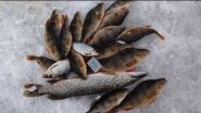 Щука зимой на жерлицы!Веселая рыбалка...Winter pike on the imitation fish!Fun fishing...