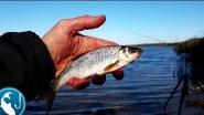 Как ловить осеннюю плотву на фидер | Рыбалка с Родионом