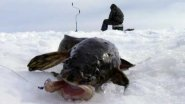 Охота за Налимом зимой.
