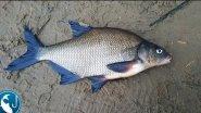 Трудовая рыбалка на #фидер в ноябре | Рыбалка с Родионом