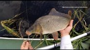 3 лайфхака и рыбалка на карпа   серия 2