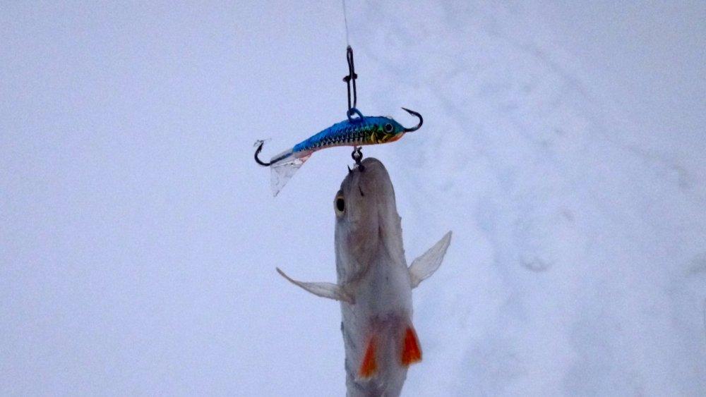 Глухозимье со Strike Pro Dolphin Ice 30 mm. 1