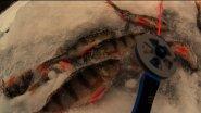 Заготовка живца на жерлицы - ловля окуня на безнасадочную мормышку