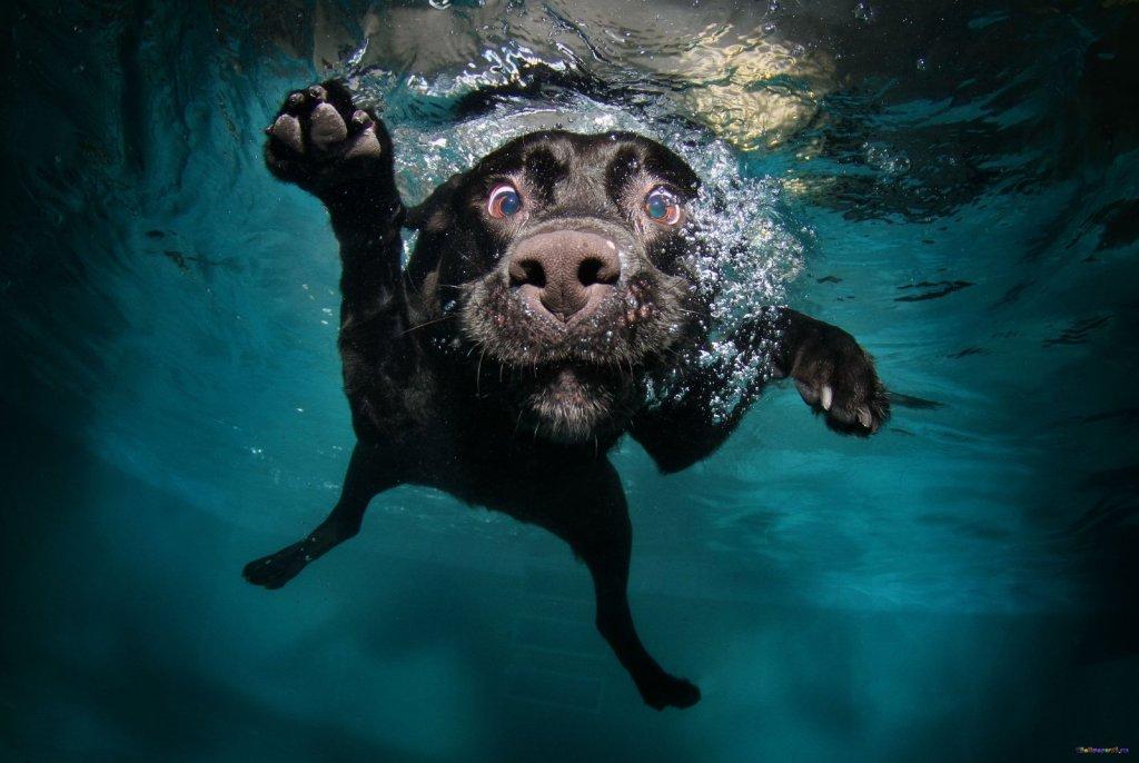 """Пес рыболовный, кличка """"воблер"""""""
