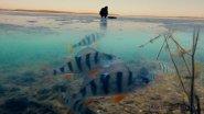 Зимняя рыбалка 2016-2017 с озвучкой. Поклевки окуня на мормышку. Подводные съемки