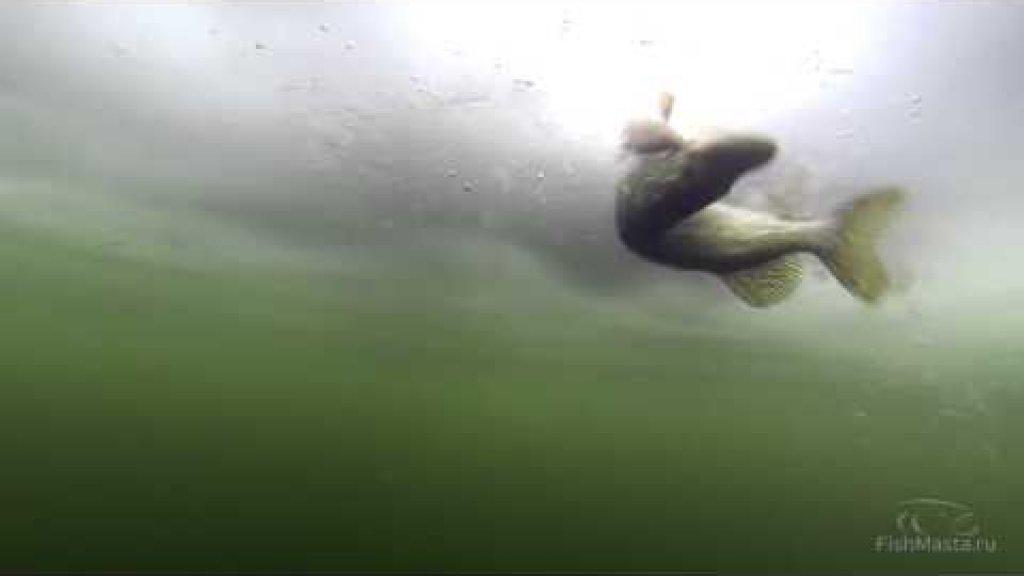 Как поймать щуку зимой на жерлицу. Подводная съемка