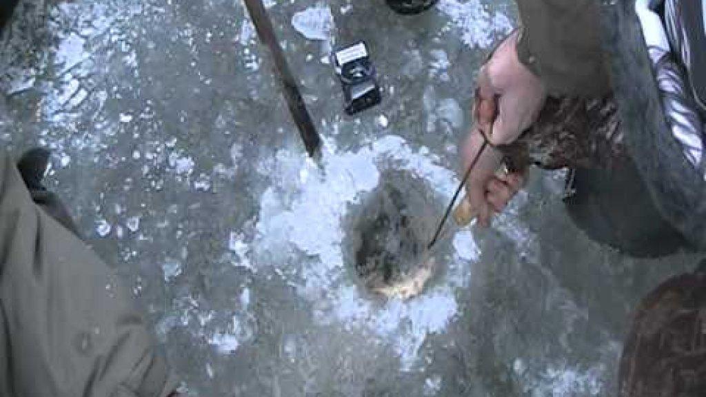 Огромный сазан не пролазит в лунку. Что будут делать рыбаки?