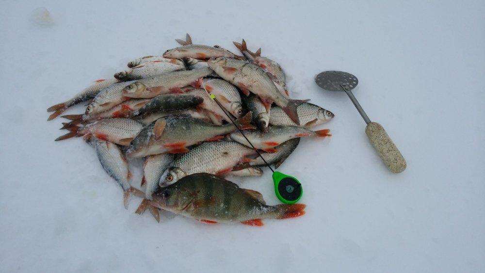 Сегодня рыбка дождалась