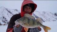 Килограммовые окуни на балансир. Щука на раттлин со льда. Зимняя рыбалка 2017.