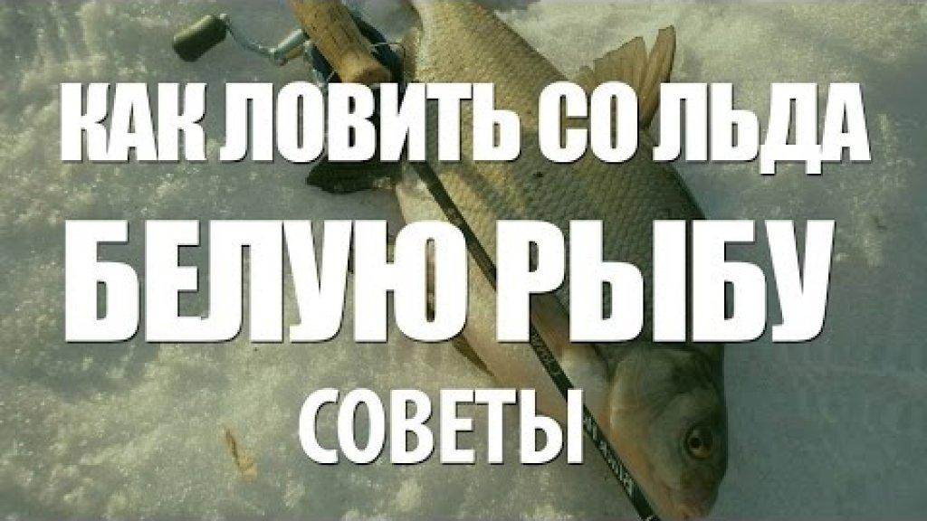 Советы по зимней рыбалке на белую рыбу со льда