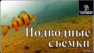 Подводные съемки. Река Дон. Окунь,плотва,подлещик,голавль. (LiveFishing)