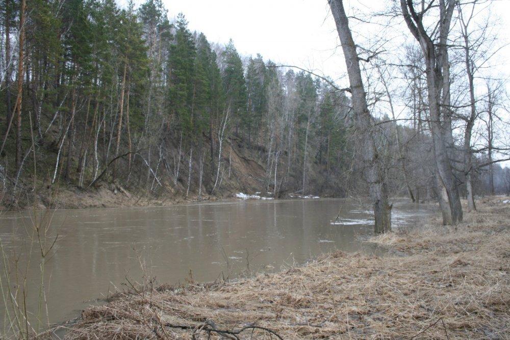 Родная река в половодъе
