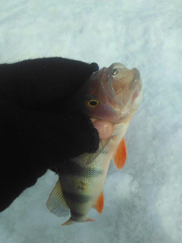 Затон, рыба есть!